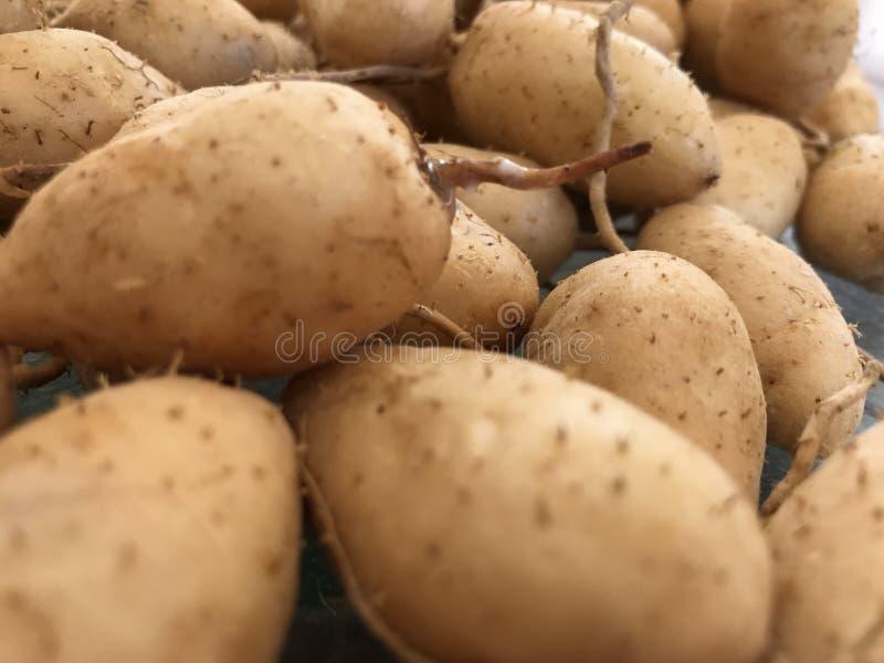 Spets av potatisar royaltyfri foto