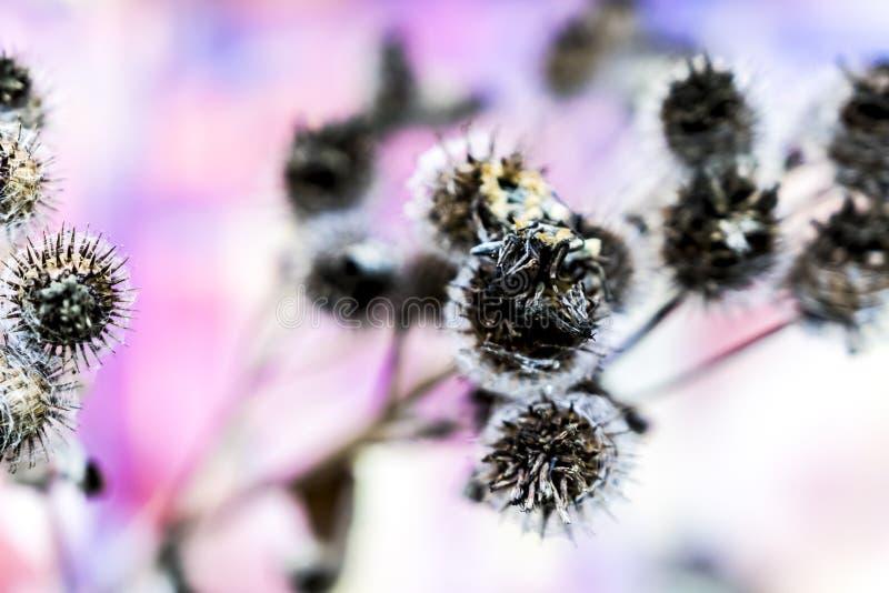 Spetsig blomma i höst royaltyfri bild