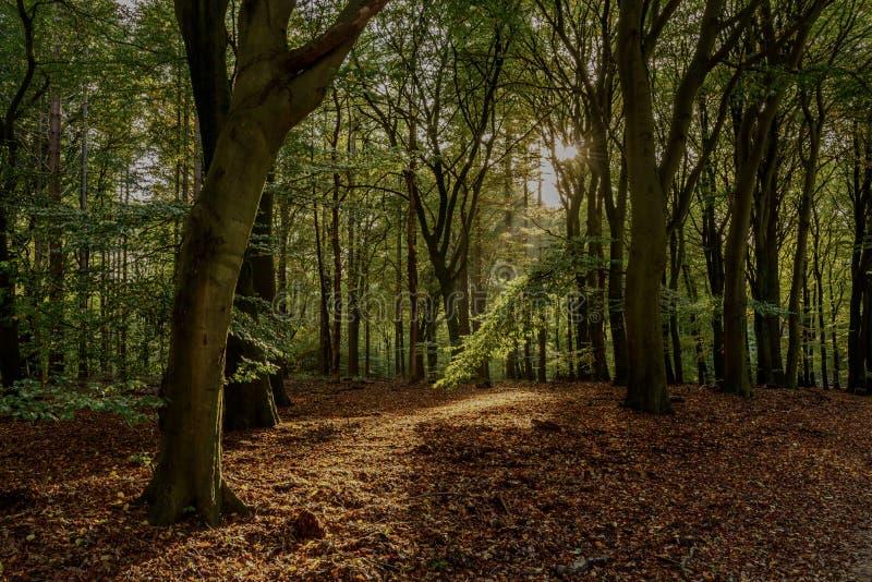 Speulderbos d'automne photographie stock libre de droits