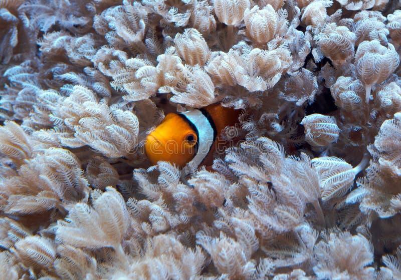 Spexa fisken arkivfoto