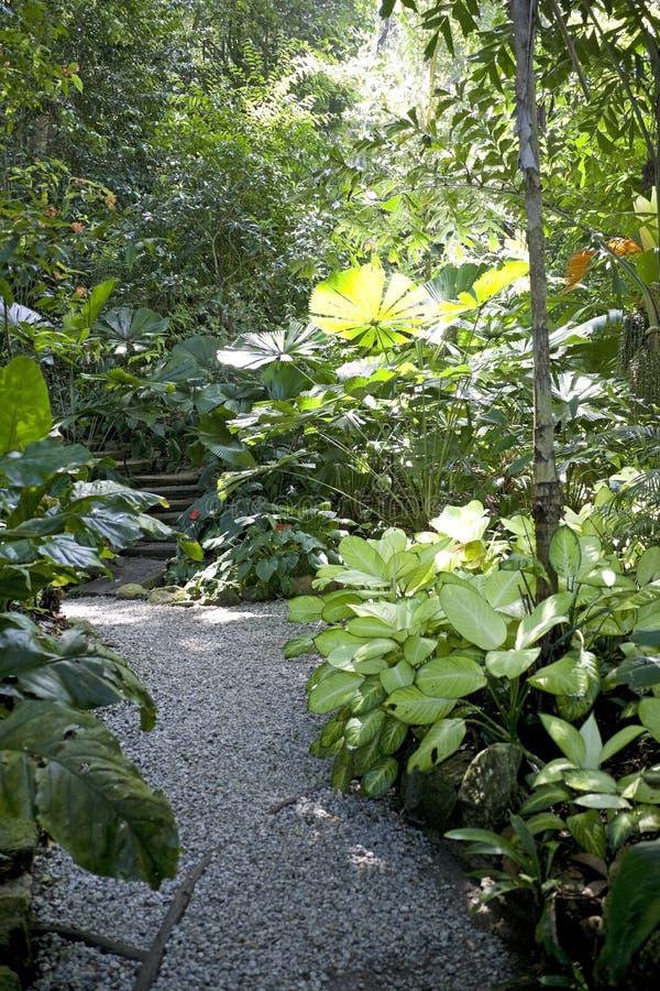 spezia del giardino tropicale immagini stock libere da diritti