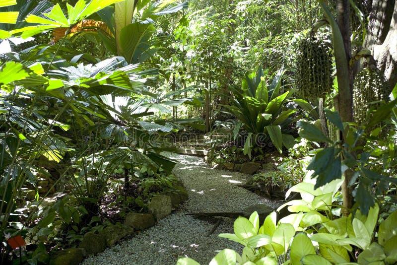 spezia del giardino tropicale fotografie stock