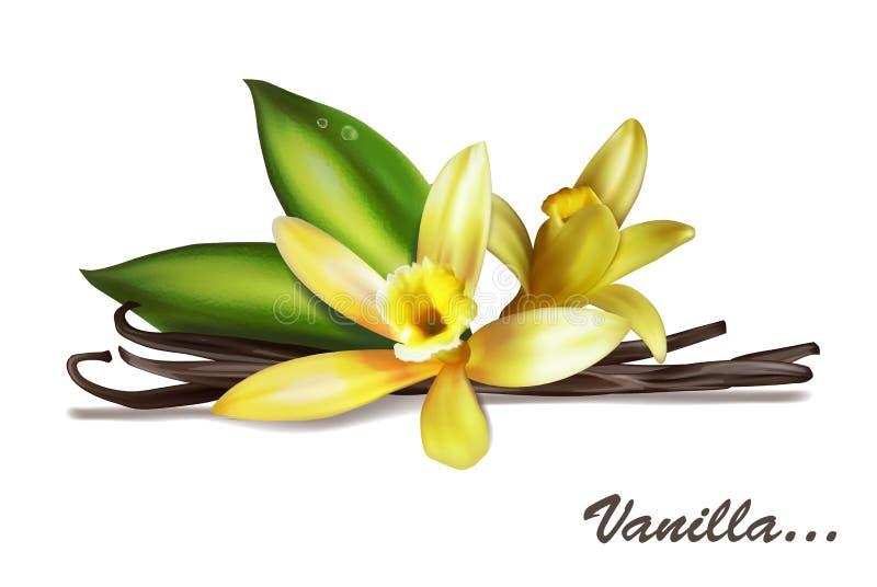 Spezia della vaniglia con il fiore e le foglie illustrazione vettoriale
