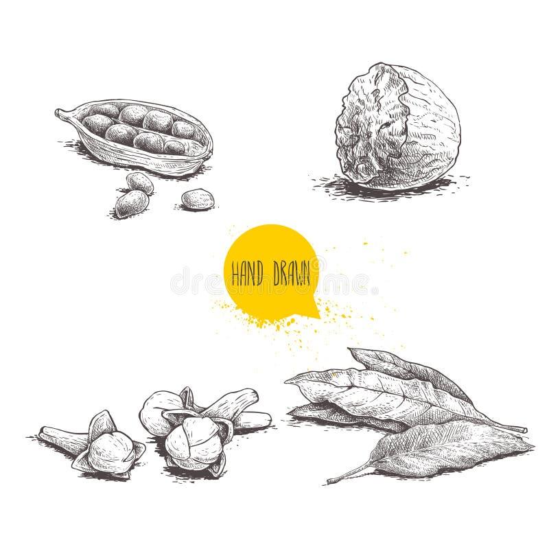 Spezie disegnate a mano di schizzo messe Foglie, noce moscata, cardamomo e chiodi di garofano della baia Illustrazione di vettore royalty illustrazione gratis