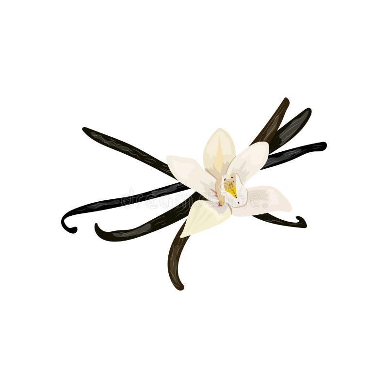 Spezie Fiore della vaniglia illustrazione vettoriale