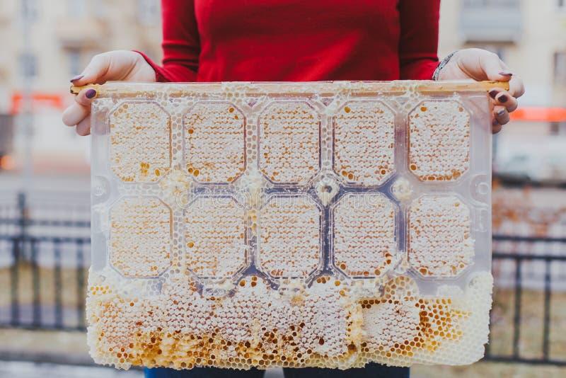 Spezieller Honigkamm, Abschluss oben, fließend, Bienegarten, Naturprodukte, Bienenhaus auf Straße in Hand zwei lizenzfreies stockbild