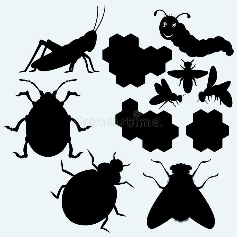 Spezies von Insekten lizenzfreie abbildung