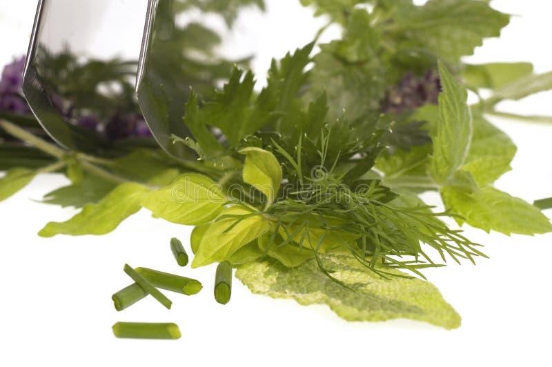 Spezzettamento delle erbe a pezzi fresche. fotografia stock libera da diritti