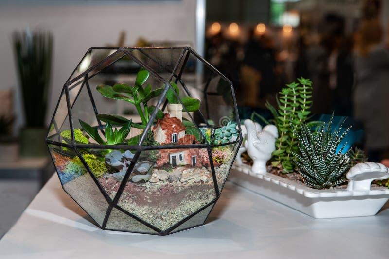 Sphère en verre pour cultiver de petits succulents à la maison Usines à la maison Art photo libre de droits