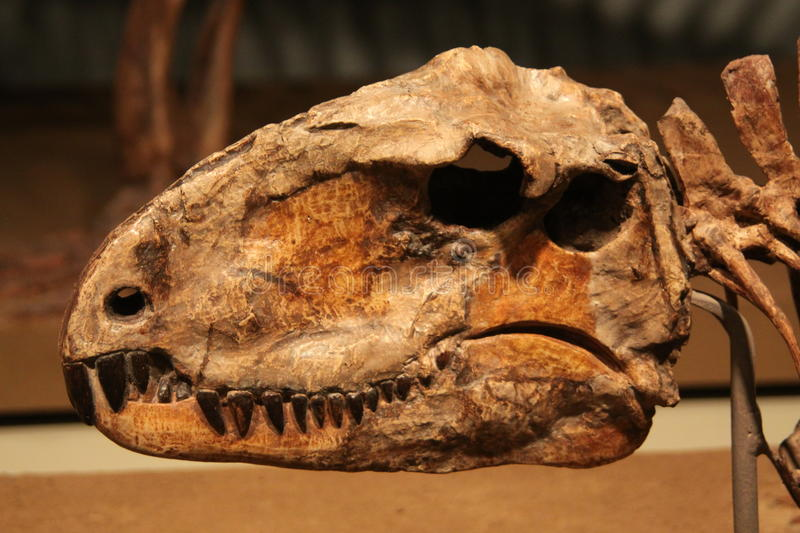 Sphenacodon photos stock