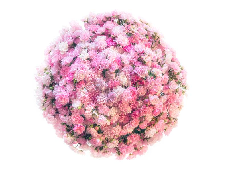 Little planet rose royalty free stock photos