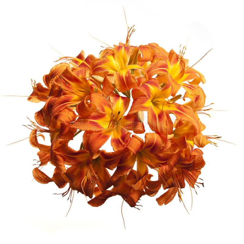 Sphere of Lily Flowers royalty free stock photos