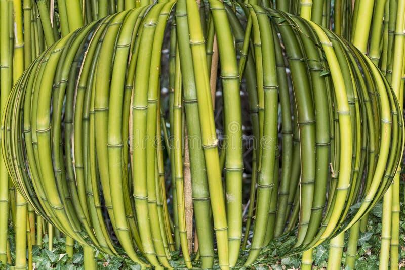 Sphered bambu arkivbilder