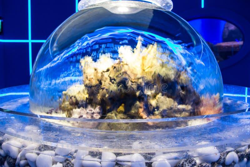 Spherical aquarium stock image