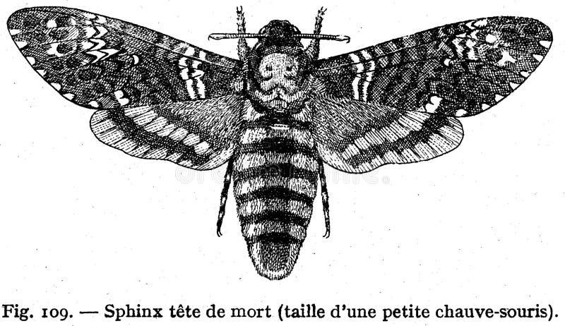 Sphinx Free Public Domain Cc0 Image