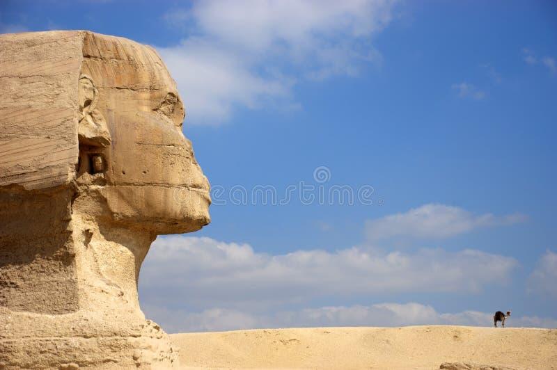 Sphinx antigo de Egipto o Cairo Giza que olha o camelo imagens de stock royalty free