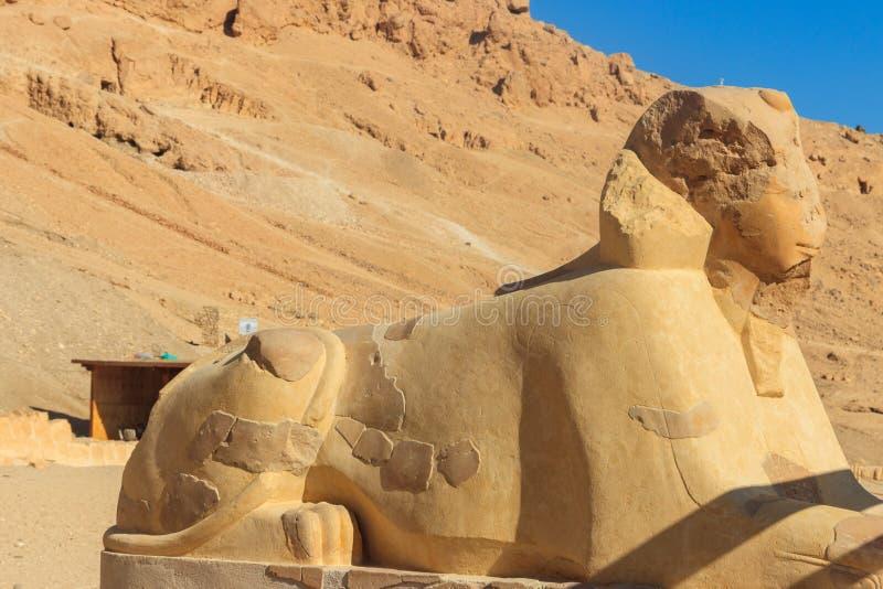 Sphinx près de temple mortuaire de Hatshepsut à Louxor, Egypte image libre de droits