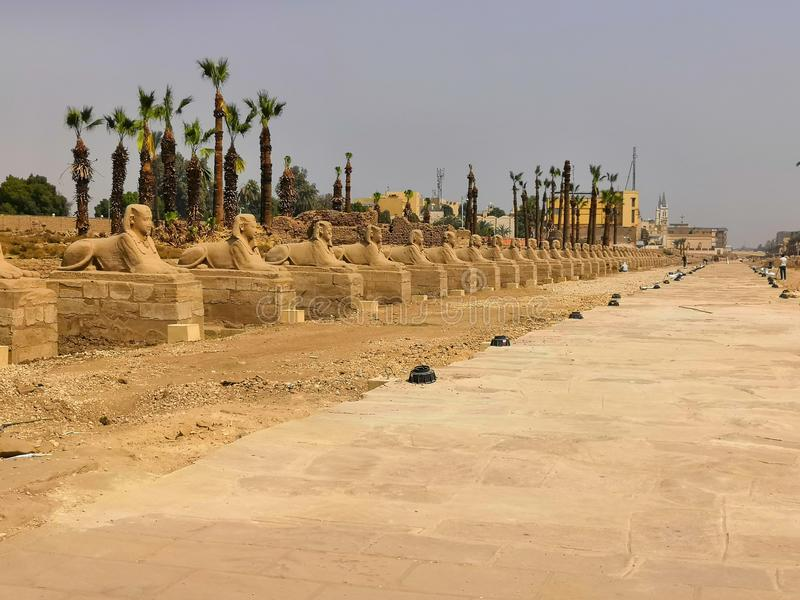 Sphinx road egypt royalty free stock photo