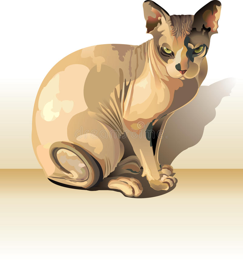 Download Sphynx cat stock illustration. Illustration of graceful - 25384072