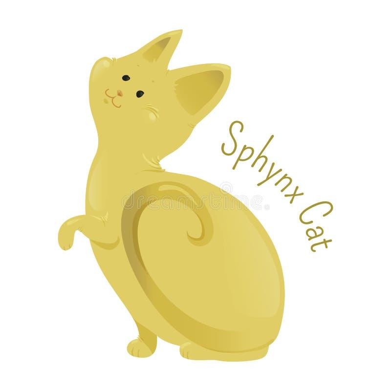 Sphynx kot na białym tle royalty ilustracja
