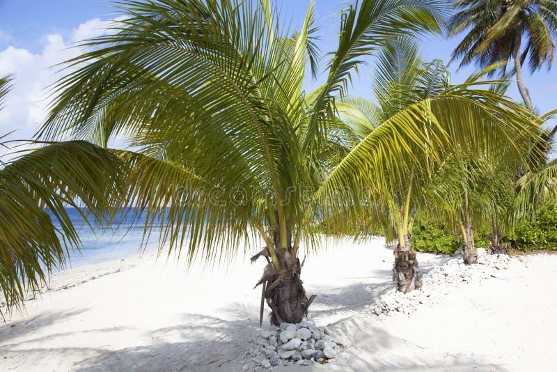 Spiagge di Grand Cayman fotografie stock