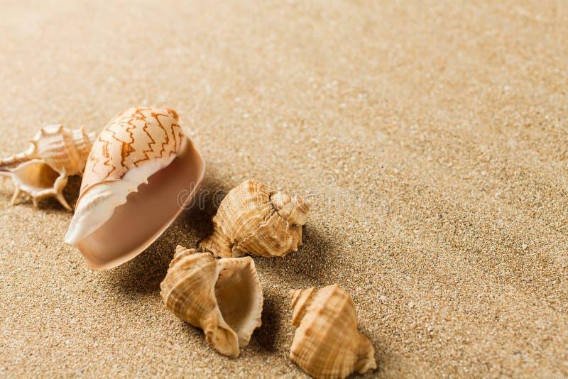 Download Spiaggia immagine stock. Immagine di grano, wallpaper - 117978759