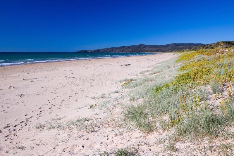 Spiaggia australiana fotografie stock libere da diritti