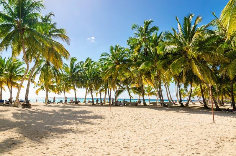 Spiaggia caraibica esotica in pieno di belle palme, Repubblica dominicana fotografia stock libera da diritti