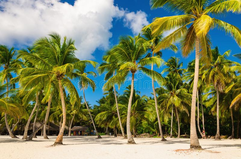 Spiaggia caraibica esotica in pieno di belle palme, Repubblica dominicana fotografia stock