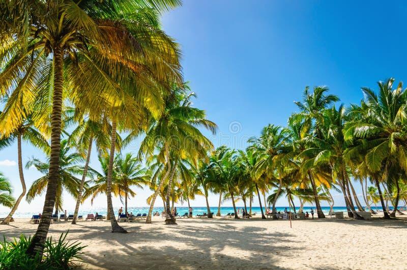 Spiaggia caraibica esotica in pieno di belle palme, Repubblica dominicana immagini stock libere da diritti
