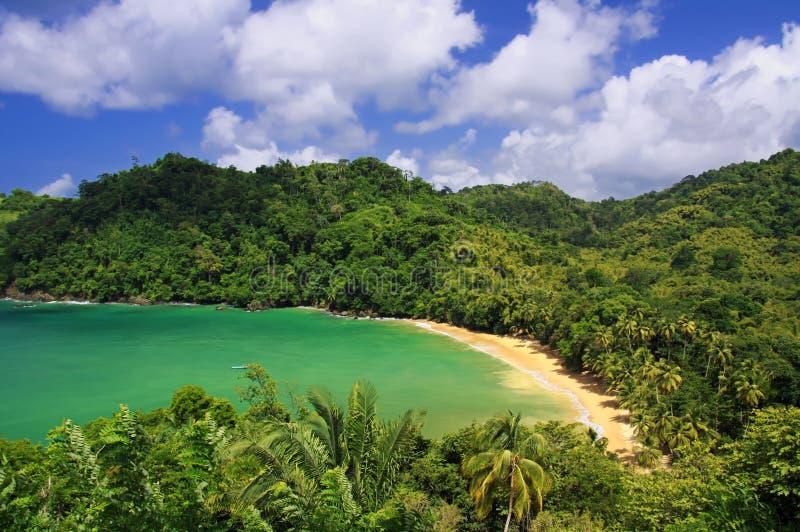 Spiaggia caraibica - Tobago 04 fotografia stock libera da diritti