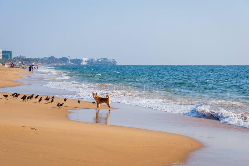 Spiaggia a Colombo, Sri Lanka fotografia stock libera da diritti
