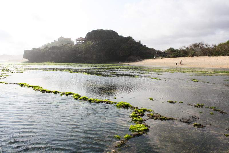 Spiaggia con il lotto di alga verde fotografia stock libera da diritti