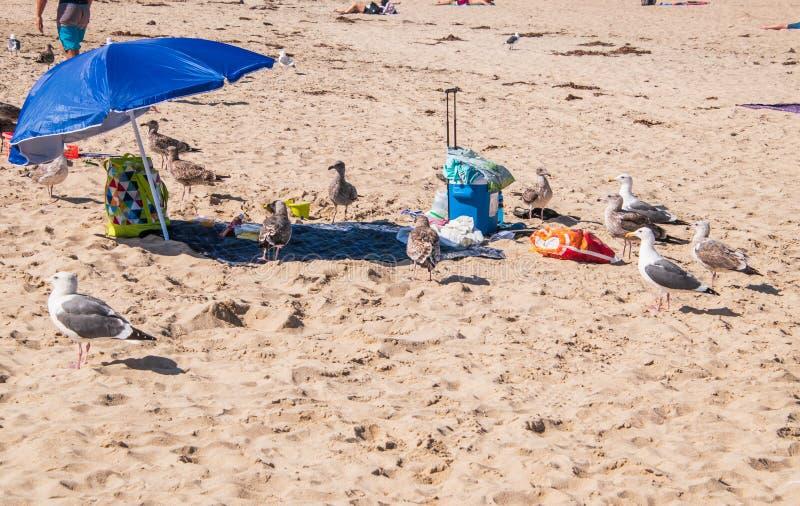 Spiaggia con il piccolo ombrello di sole blu e qualcuno oggetti personali C'è un gruppo di gabbiani nell'area immagine stock