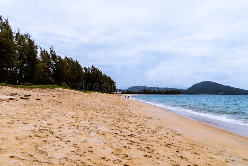 Spiaggia con l'abetaia immagine stock