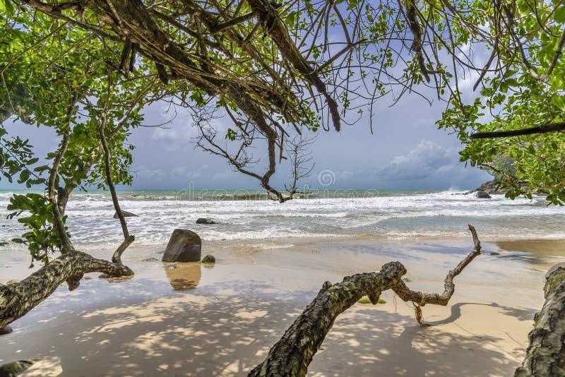 Spiaggia con l'albero e la sabbia bianca blu e del mare fotografie stock