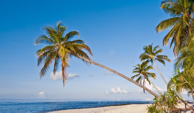 Spiaggia con la palma di noce di cocco sull'isola tropicale immagini stock