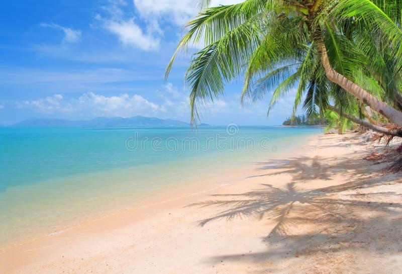 Spiaggia con la palma ed il mare di noce di cocco - Palma di cocco ...