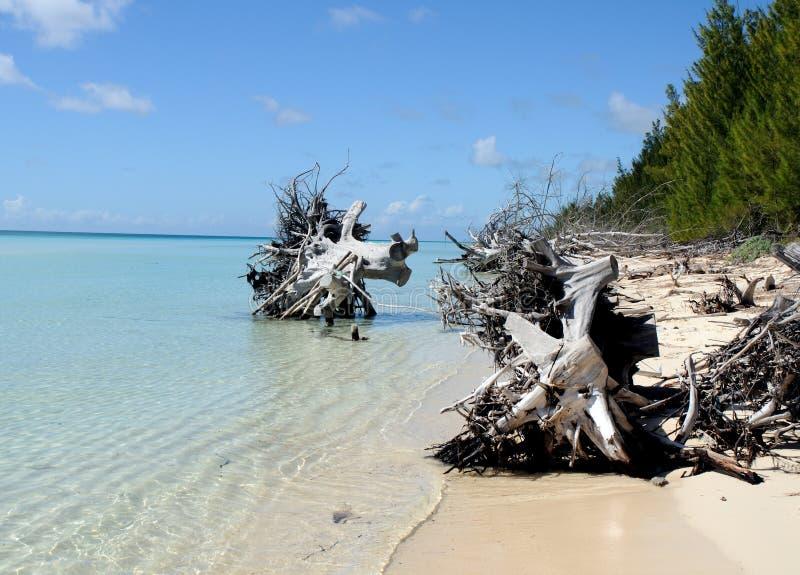 Spiaggia Debri di Bahama immagini stock libere da diritti