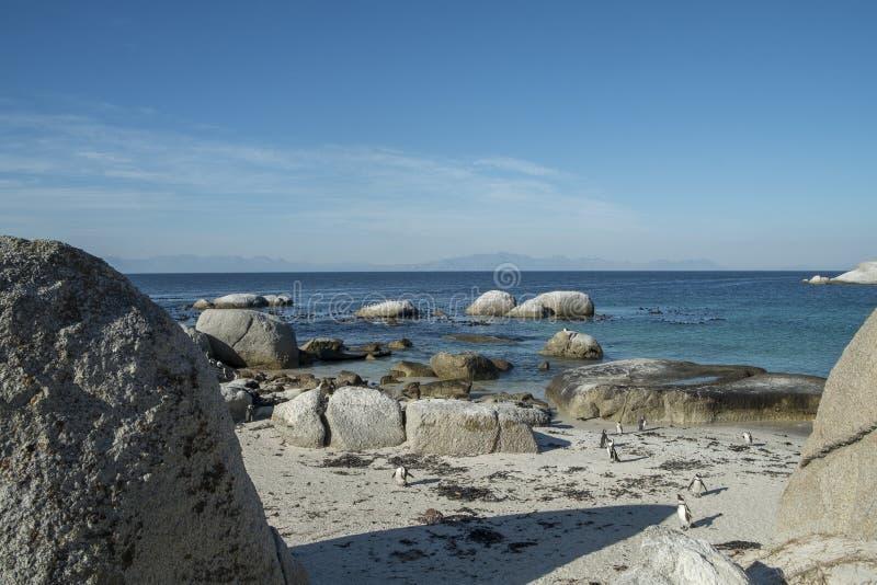 Spiaggia dei pinguini a Città del Capo fotografie stock libere da diritti