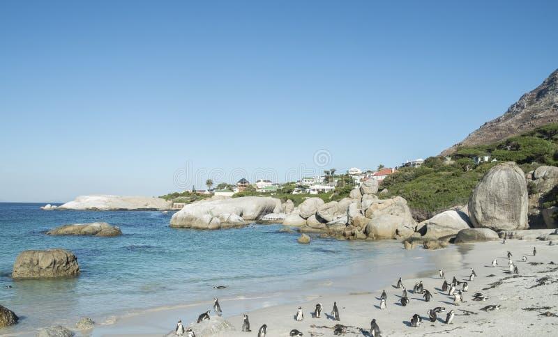 Spiaggia dei pinguini a Città del Capo immagini stock libere da diritti