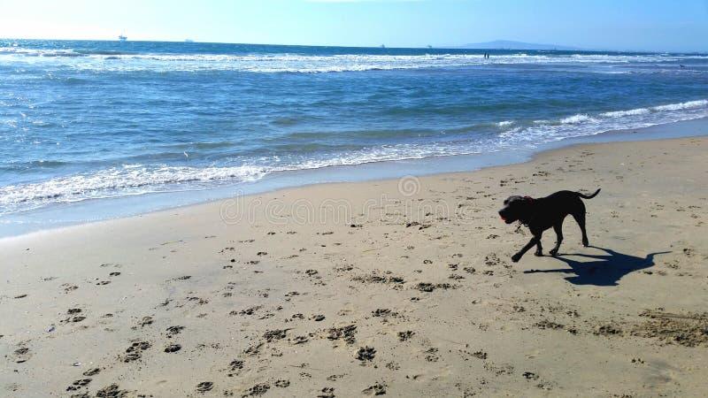 Spiaggia del cane fotografie stock
