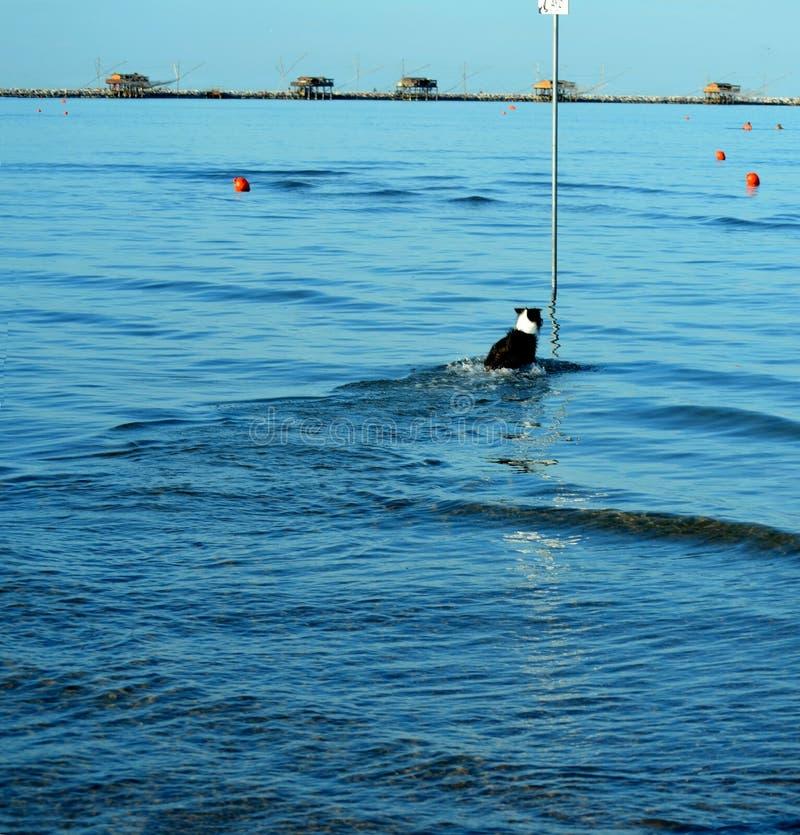 Download Spiaggia del cane immagine stock. Immagine di nave, compagno - 56875675