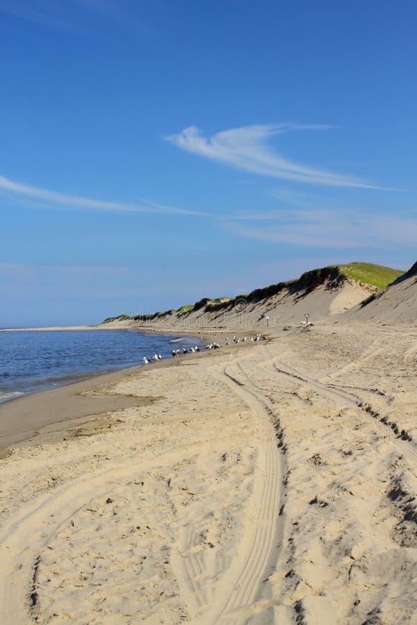 Spiaggia del Capo Cod immagini stock libere da diritti