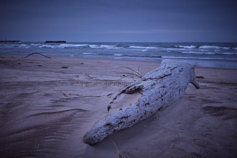 Spiaggia del Grandi Laghi nell'inverno immagine stock libera da diritti