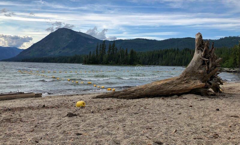 Spiaggia del legname galleggiante immagine stock