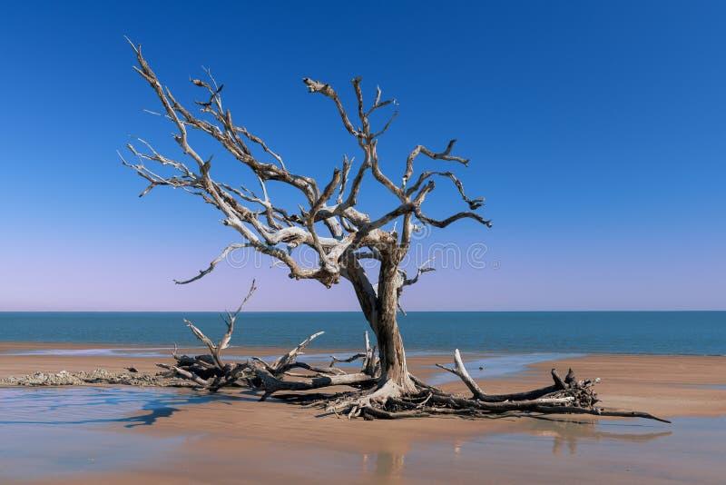 Spiaggia del legname galleggiante sull'isola di Jekyll fotografie stock