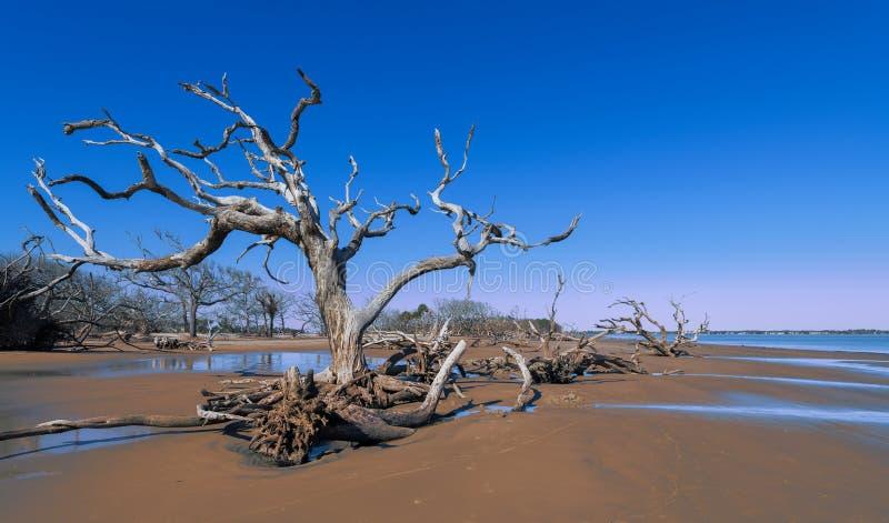 Spiaggia del legname galleggiante sull'isola di Jekyll fotografia stock