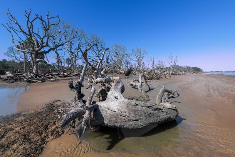 Spiaggia del legname galleggiante sull'isola di Jekyll immagini stock