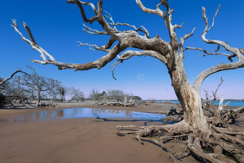 Spiaggia del legname galleggiante sull'isola di Jekyll immagini stock libere da diritti